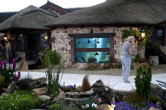 Watermill Lodge: the aquarium at the watermill