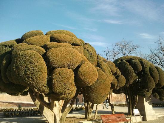 los famosos arboles del parque del retiro picture of