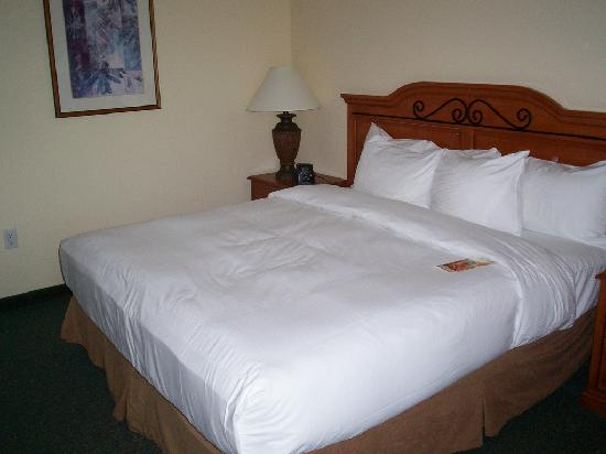 Hilton Austin Airport: My bed