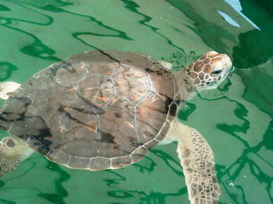 Hotel Nude Zipolite: centro mexicano de la tortuga