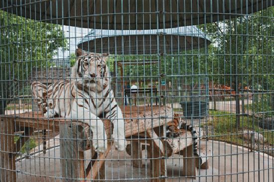 Zoo in greenville wi