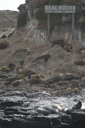 Wildlife Coast Cruises: Seal Rocks