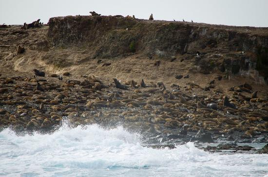 Wildlife Coast Cruises: More seals...