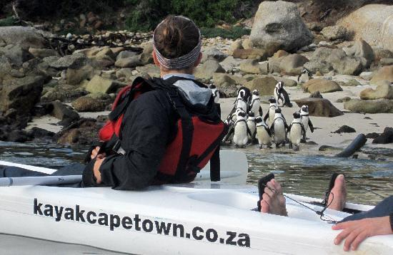 Kayak Cape Town: Watching the penguins from a kayak