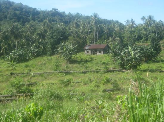 Fieldskills Adventures - Day Tours: This is typical Borneo!