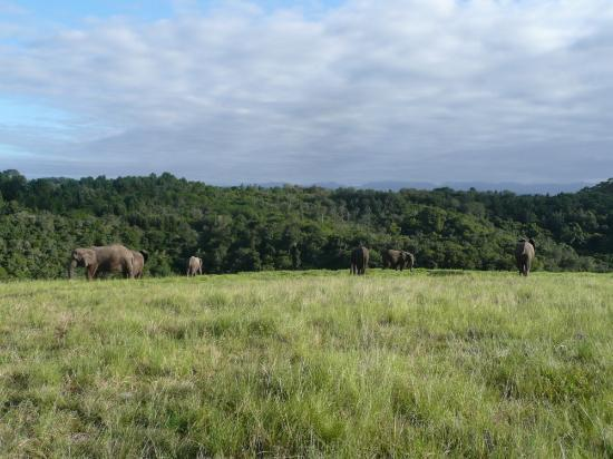 Knysna Elephant Park Lodge: Elephants' leisure time after sunrise walk