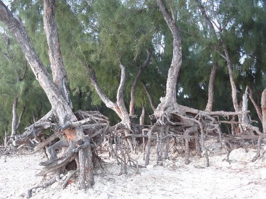 Alamanda Hôtel : La plage voisine