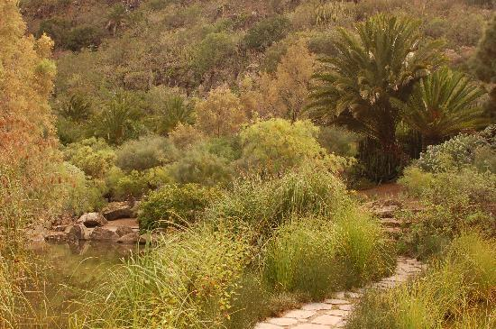 Foto de jard n bot nico canario las palmas de gran canaria huge cactus tripadvisor - Jardin botanico las palmas ...