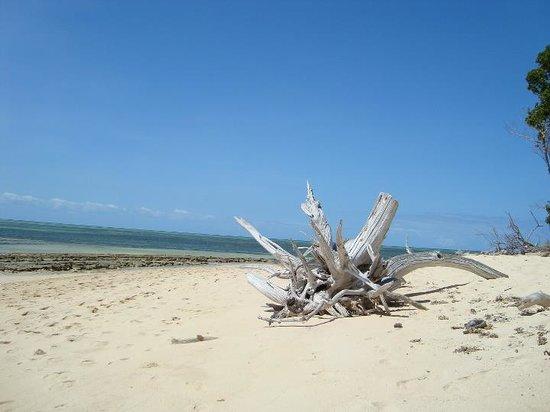 Green Island Resort: bellissima spiaggia incontaminata