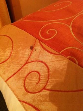 Flatiron Hotel : Blood on the Duvet in Room #1