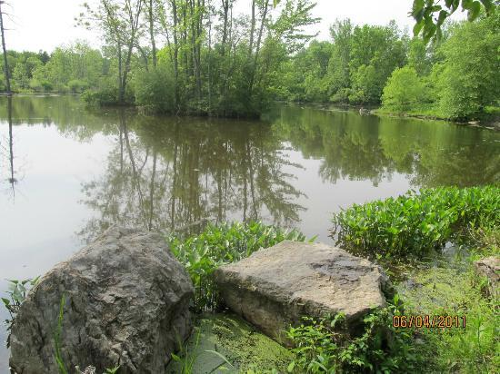 Cornell Lab of Ornithology: One of  several  interesting  ponds