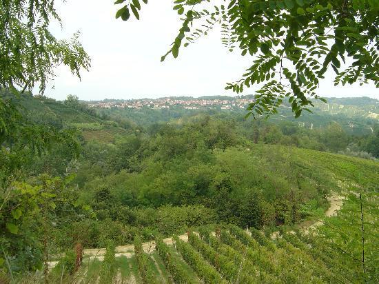 Monta, Italien: Le numerose vigne di Montà d'Alba.