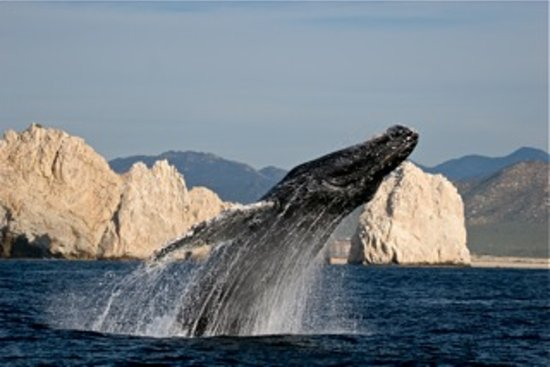 Cabo Expeditions: Intimate whale watching
