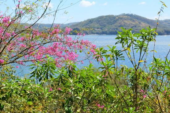 Four Seasons Resort Costa Rica at Peninsula Papagayo: A view from the grounds