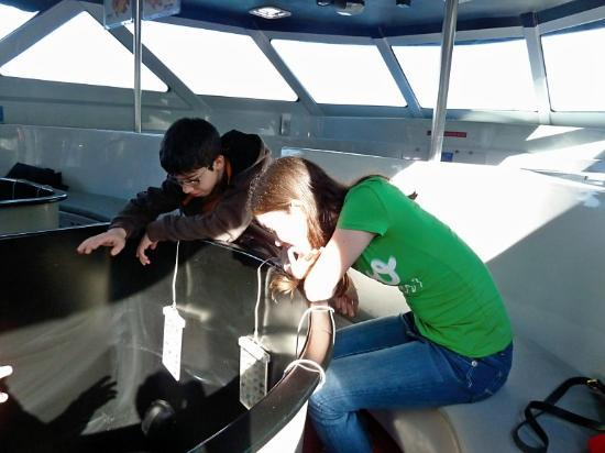 Glass Bottom Boat Tour: Looking for fish
