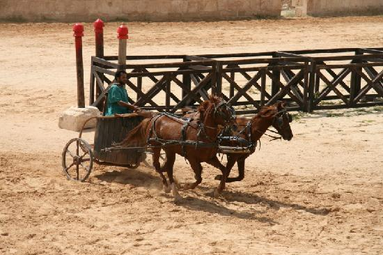 The Roman Army and Chariot Experience: Biga al galoppo