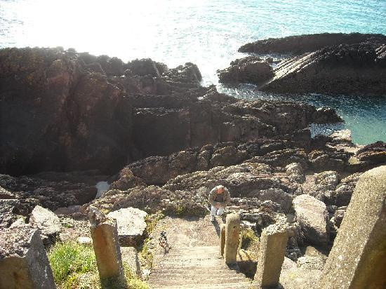 Ballycotton Cliff Walk : Path to go down to the sea