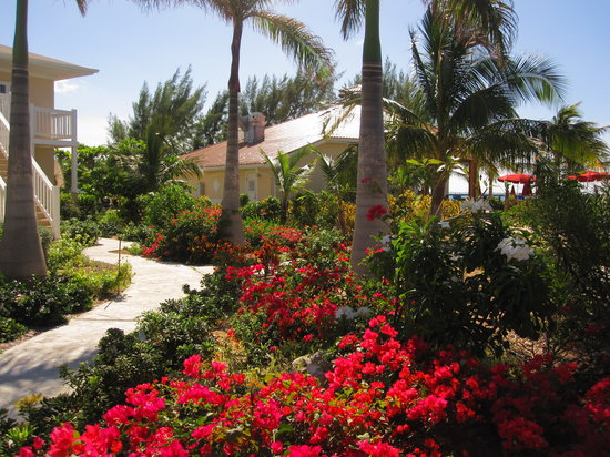 White Sands Beach Resort: landscape