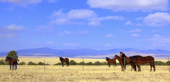 Cerrillos, Nuevo Mexico: The band of wild mustangs