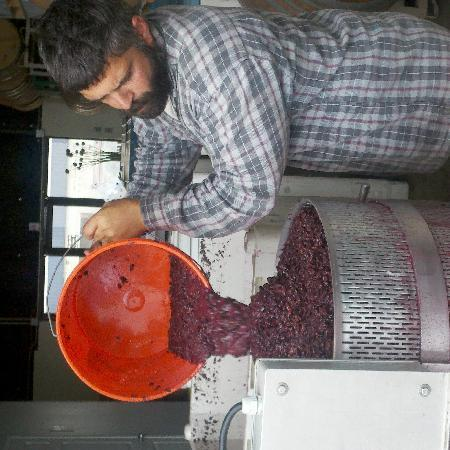 Lompoc Wine Ghetto: Winemaker Mark Cargasacchi pressing Pinot Noir at Jalama Wines