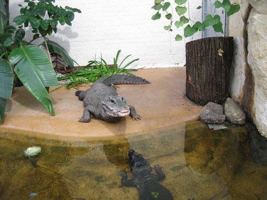 Zoo Vivarium Darmstadt