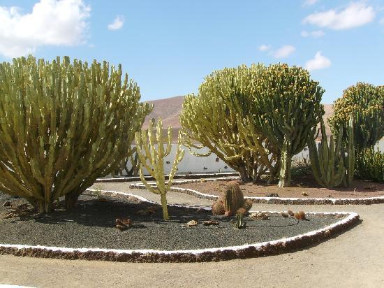 Centro de Artesania Molino de Antigua: Kakteengarten