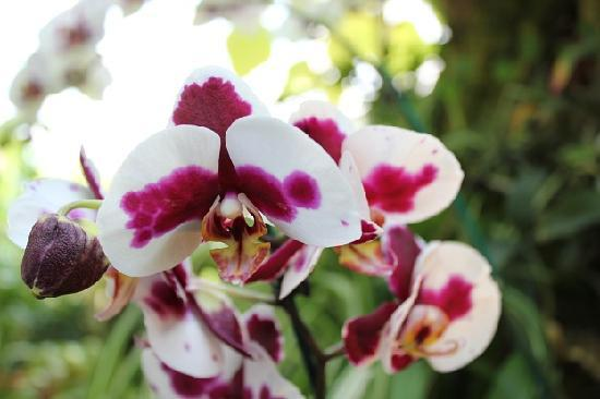 Phipps Conservatory and Botanical Gardens: Orchid room