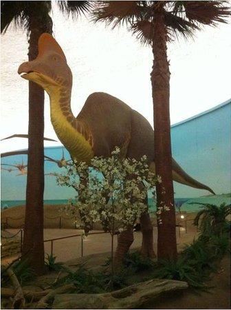 Museum Of Natural History Hays Kansas