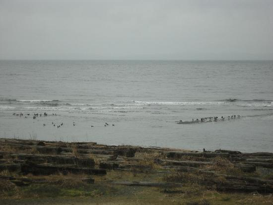Shorewater Resort : View of ocean birds from our room.  Room 206.