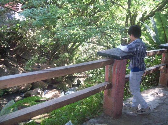 Uruapan, Мексика: Entrada trasera al parque