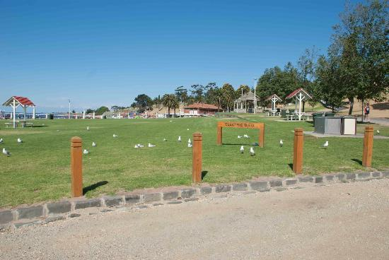 Geelong, Australia: BBQ facilities at Eastern Beach