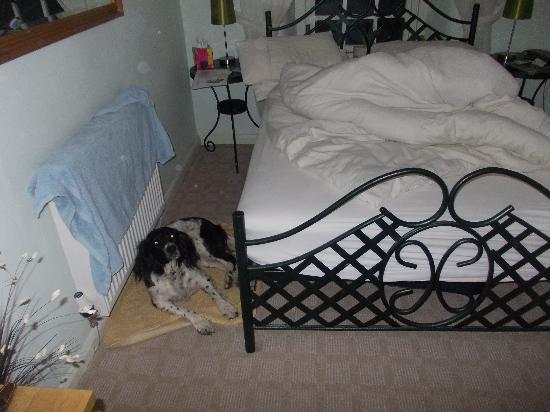 Colwyn Guest House: Sorry didn't make the bed but Pepper slept well!