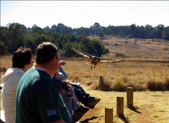 Dullstroom Bird Of Prey & Rehabilitation Centre: Dullstroom Birds of Prey
