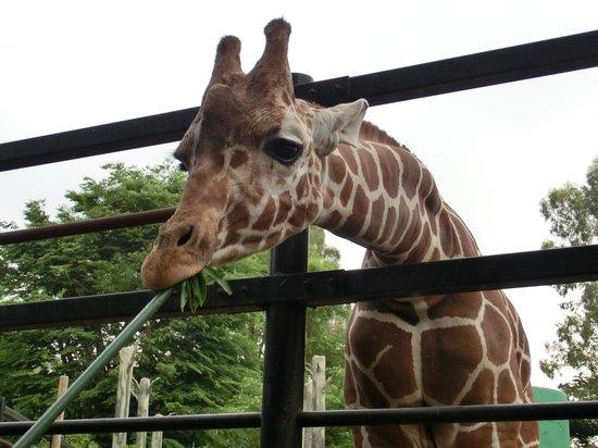 สวนสัตว์ฮามุระ