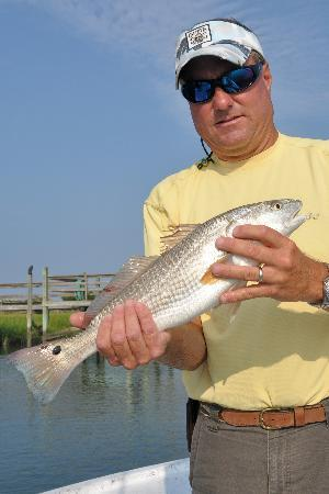 North Myrtle Beach Fishing Charters The Majority Of Southeastern Inshore Summer Red Drum Are Slot