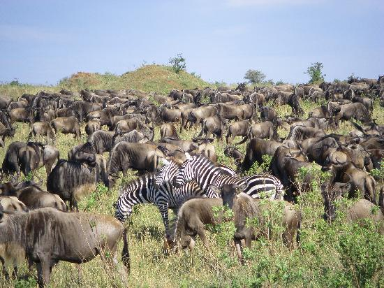 Keekorok Lodge-Sun Africa Hotels: Zebras & Wilde Beests