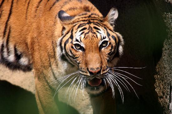 Cincinnati, Ohio: Cincinnati Zoo & Botanical Garden