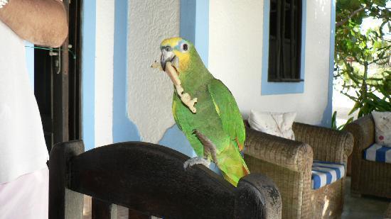 Posada Acuario: Pappagallo all' Acuario