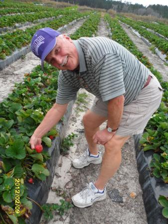 JG Ranch: Picking Strawberries in the field!