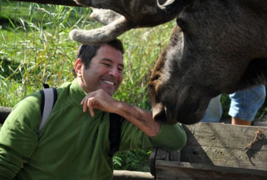 Moose Garden: feeding