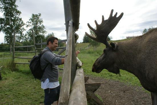 Moose Garden: Beppe 2