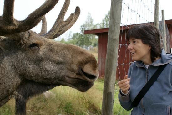 Moose Garden: incontro