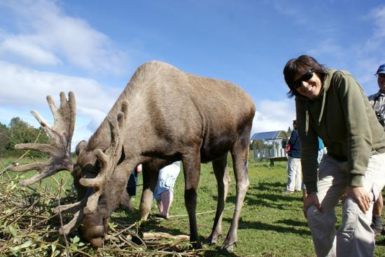 Moose Garden: mangiano