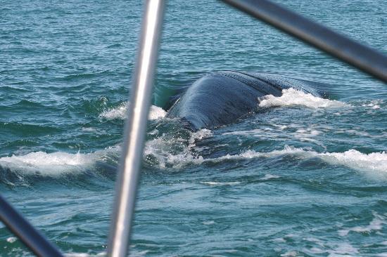 Schulphoek Seafront Guesthouse & Restaurant: walvis en dolfijn naast de boot