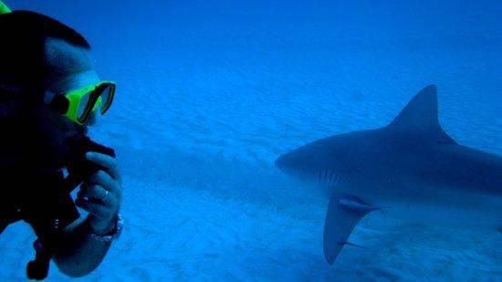 Deep Mexico: Tiburon Toro (Playa del Carmen Q.Roo)