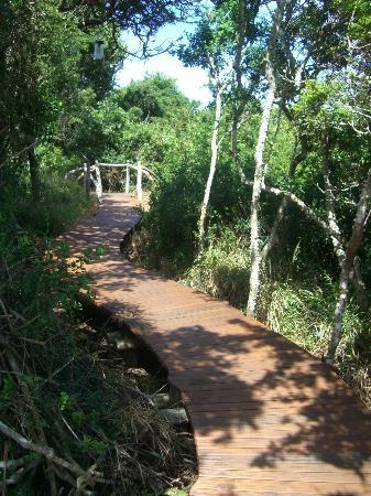 Sibuya Game Reserve & Tented Camp: Path leading to accomodation