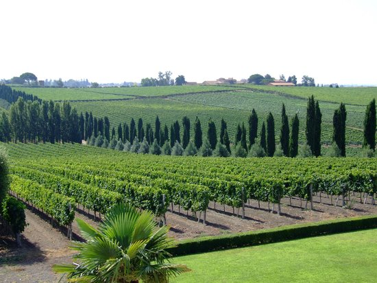 Rutuli Vineyard