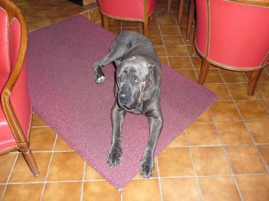 Hotel-Restaurant Le Faude: jedai le chien des proprios trop gentil