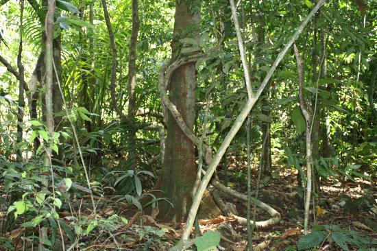 Barro Colorado Island: foresta