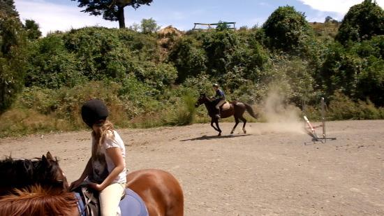 Kowhai Residential School of Riding Ltd: Me in the jumping arena
